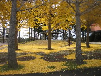 秋も終り06イチョウ紅葉.jpg