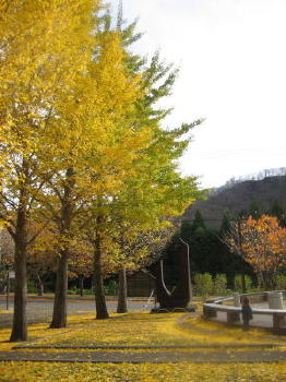 秋も終り08イチョウ紅葉.jpg