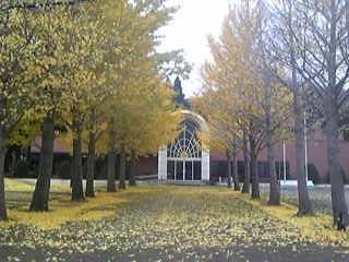 秋も終り09イチョウ並木.jpg