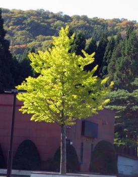 秋7紅葉.jpg