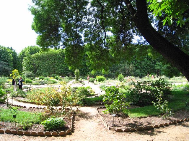 bIMG_3410植物園.jpg