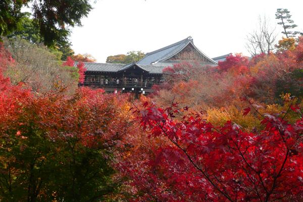 東福寺ー紅葉1.jpg