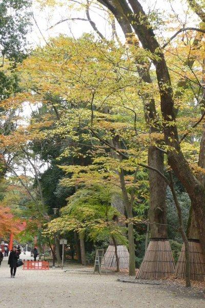 下鴨神社7.jpg