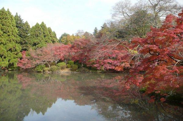 京都府立植物園1.jpg