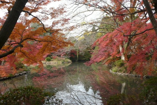 京都府立植物園2.jpg