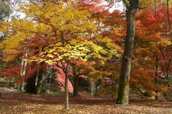 京都府立植物園3.jpg