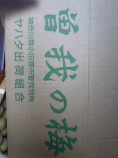 梅の箱.jpg