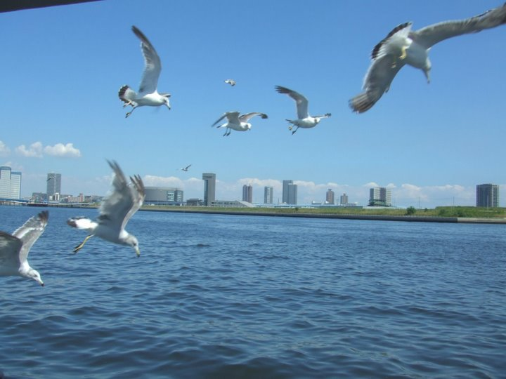 お台場付近にて、かもめが船の間近までよってきてビックリ!(ニューシティ号)(写真)