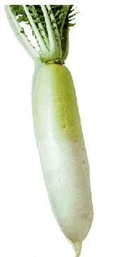 緑 部分 大根 の