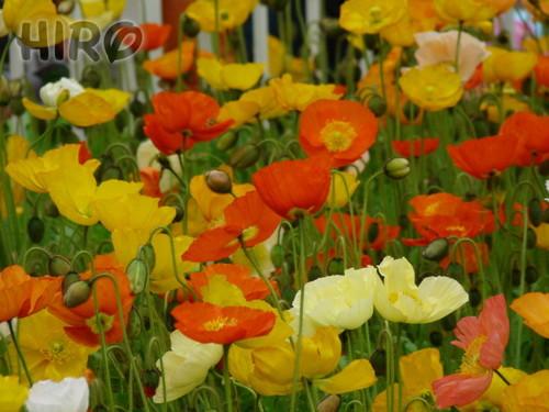 イースターパレード_20110503_20.jpg