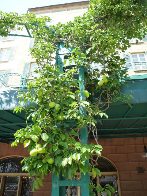 ハーバーサイドの木の実_20100822_01.jpg