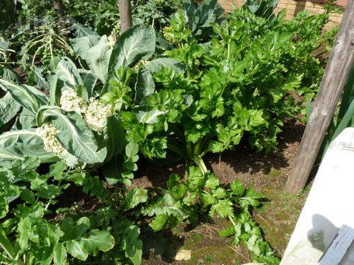 ペグおばさんの畑 20100313_09.jpg