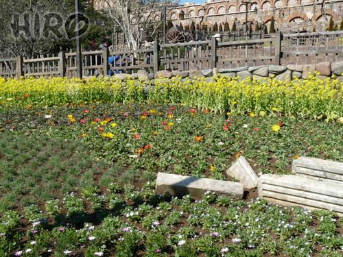 春の花_TDS_20110305_01.jpg