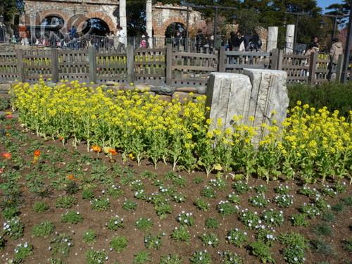 春の花_TDS_20110305_03.jpg