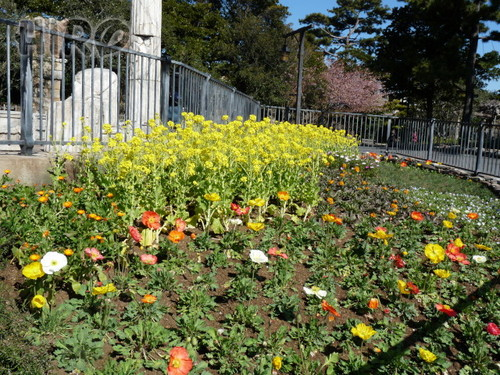 春の花_TDS_20110305_05.jpg