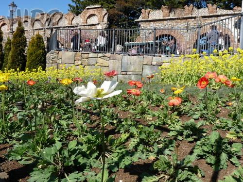 春の花_TDS_20110305_06.jpg