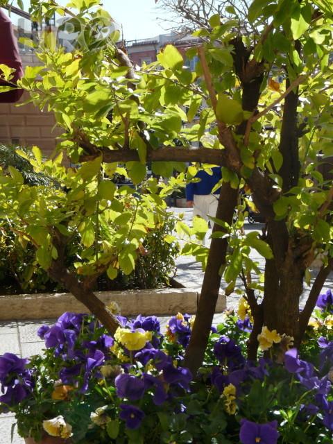 春の花_TDS_20110305_10.jpg