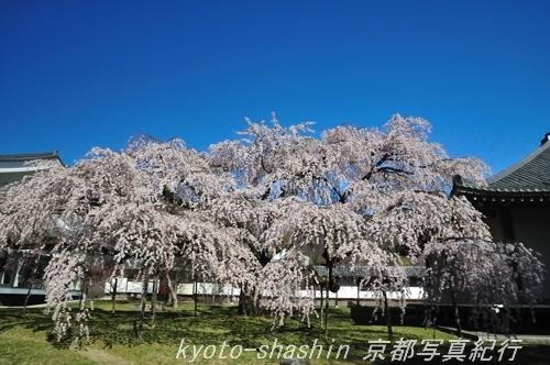 110404醍醐寺霊宝館04.jpg