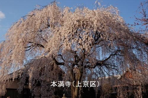 本満寺1 a.jpg