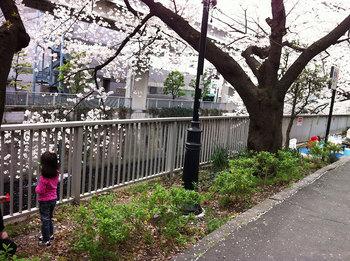 桜-11.jpg