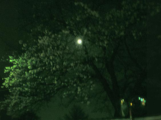 禅林寺の夜桜.jpg