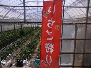 2011,2,26 河津桜 024.jpg
