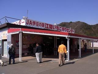 2011,2,26 河津桜 026.jpg