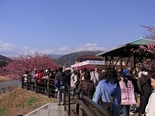 2011,2,26 河津桜 028.jpg