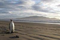 皇帝ペンギン.jpg