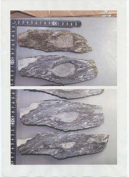 20160520サンゴ化石(TBK12475).jpg