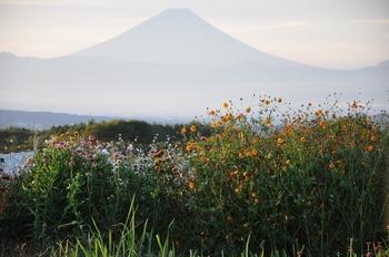 富士と花-1.jpg
