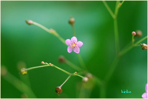 小ちゃなお花