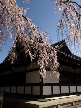 京都 旧武徳殿