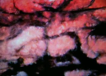 三岸節子の画像 p1_36