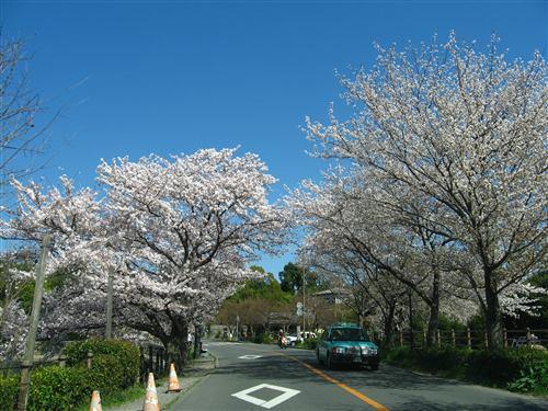 嵐山周辺 (2) .jpg