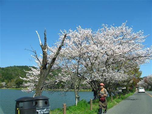 嵐山周辺 (3) .jpg