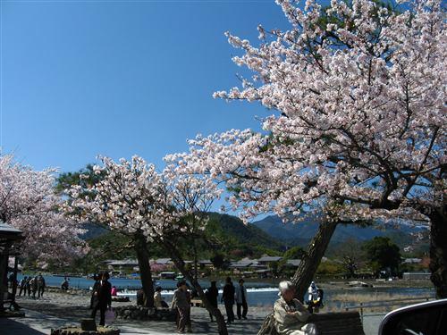 嵐山周辺 (6) .jpg