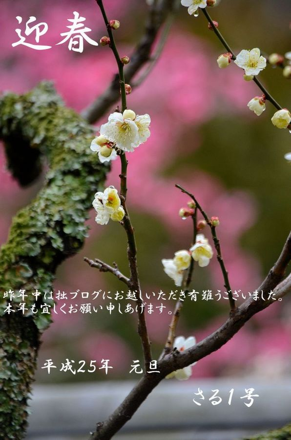 s500_DSC_5878正月__01.JPG