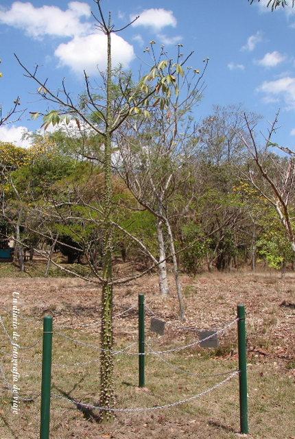 2006年3月16日から23日 グアテマラ ベリーズ メキシコ 279_00.jpg