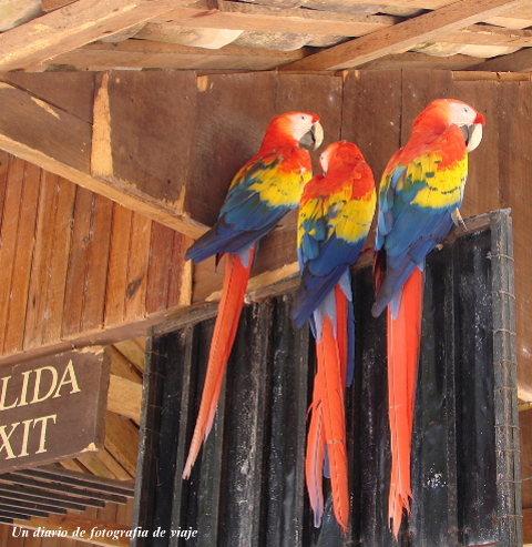 2006年3月16日から23日 グアテマラ ベリーズ メキシコ 282_00.jpg