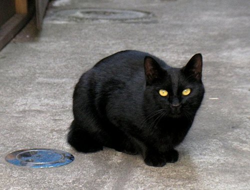 月島の黒猫①