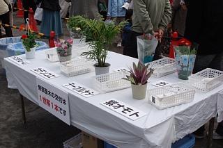 植木祭り2.jpg