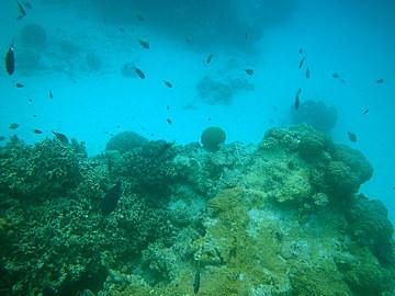 30とかしく海の中1.jpg