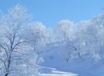 2011.2.雪景色 009.jpg