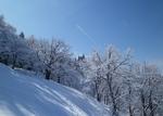2011.2.雪景色 022.jpg