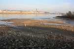 Emmerich Niedrigwasser.jpg
