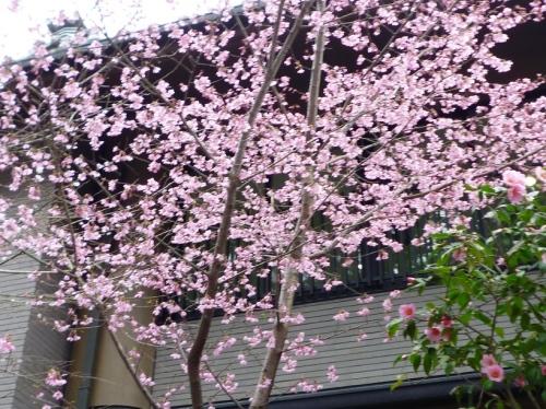 春、東福寺の道
