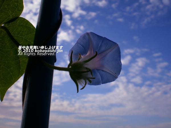 2010jin 041-600.jpg