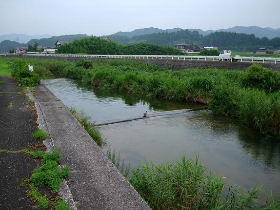 中元寺川.JPG