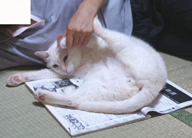 20080622yuki01.JPG